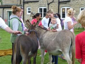 Donkeys at Village Day 2014